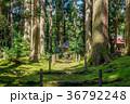 平泉寺白山神社 苔 木漏れ日の写真 36792248