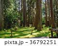 平泉寺白山神社 苔 木漏れ日の写真 36792251