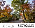 愛知 岡崎公園 紅葉の龍城神社 36792883