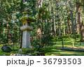 平泉寺白山神社 白山神社 平泉寺の写真 36793503
