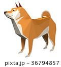 柴犬 犬 干支のイラスト 36794857
