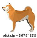 柴犬 犬 干支のイラスト 36794858