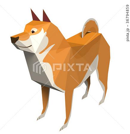 柴犬 36794859