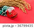 獅子舞 稲穂 正月イメージ 秋祭りイメージ 36799435