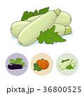 なす ナス 茄子のイラスト 36800525