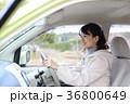 運転する女の子 36800649