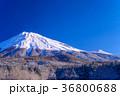 降雪の朝、西臼塚から富士山(静岡県) 36800688