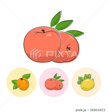 Fruit Icons, Peach, Apricot,  Melon 36803855