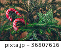 Candy Canes on a Christmas tree 36807616