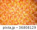 梅 背景 春のイラスト 36808129