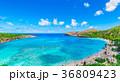 オアフ島 ハナウマ湾 ハワイの写真 36809423