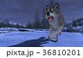 狼 イヌ科 動物のイラスト 36810201