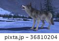 狼 イヌ科 動物のイラスト 36810204