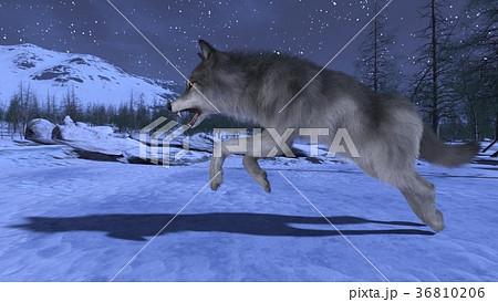 オオカミ 36810206