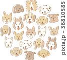犬の顔 イラスト 36810585