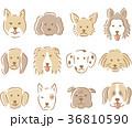 犬の顔 イラスト 36810590