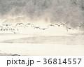 タンチョウ 鶴 飛ぶの写真 36814557
