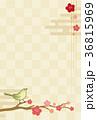 梅 市松模様 ウグイスのイラスト 36815969