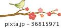 梅 鶯 枝のイラスト 36815971