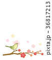 梅 鶯 枝のイラスト 36817213