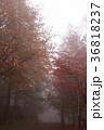 霧 横谷峡谷 自然の写真 36818237