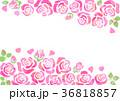 背景 フレーム 花のイラスト 36818857