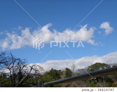 千葉公園綿打池の上の青空と白い雲 36819787