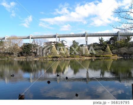 千葉公園綿打池の冬の風物詩雪吊り 36819795