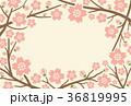 桜 フレーム ベクターのイラスト 36819995