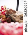 女性 ポートレート フラの写真 36820997