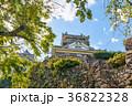 越前大野城 石垣 晴れの写真 36822328
