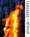 Burning of Maslenitsa Scarecrow in evening 36830841