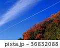 紅葉と飛行機雲 36832088