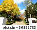 東京都墨田区 横網町公園 36832783