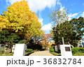 東京都墨田区 横網町公園 36832784