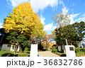 東京都墨田区 横網町公園 36832786