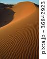 モロッコ メルズーガ 風紋の写真 36842923