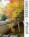 吉備路井山宝福寺の紅葉(縦位置) 36853860
