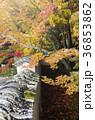 吉備路井山宝福寺の紅葉(縦位置) 36853862