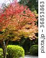 吉備路井山宝福寺の紅葉(縦位置) 36853863