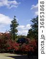 吉備路井山宝福寺の紅葉(縦位置) 36853868