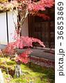 吉備路井山宝福寺の紅葉(縦位置) 36853869