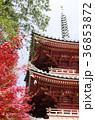 吉備路井山宝福寺の紅葉(縦位置) 36853872
