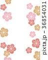 梅の花 花 花柄のイラスト 36854031