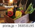 人物 野菜 パプリカの写真 36858195