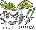 野菜2 36858803