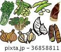 野菜9 36858811