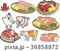 鶏肉 ささみ 肉のイラスト 36858872
