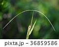 雑草 草 野草 36859586