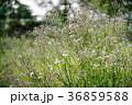 雑草 草 野草 36859588